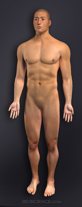 penis Naked men without